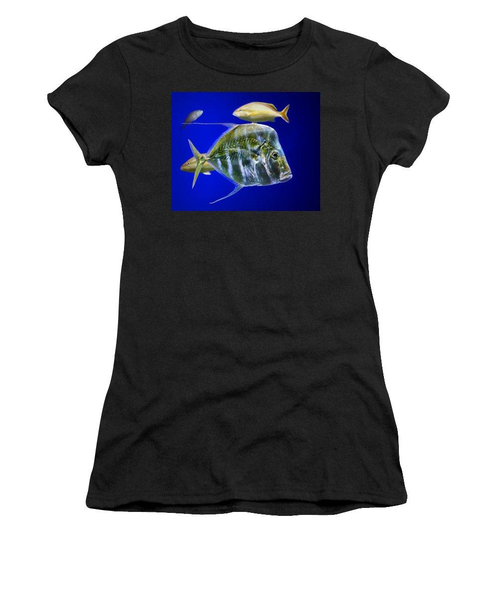Fish Women's T-Shirt featuring the photograph Aquarium Life by Nikolyn McDonald