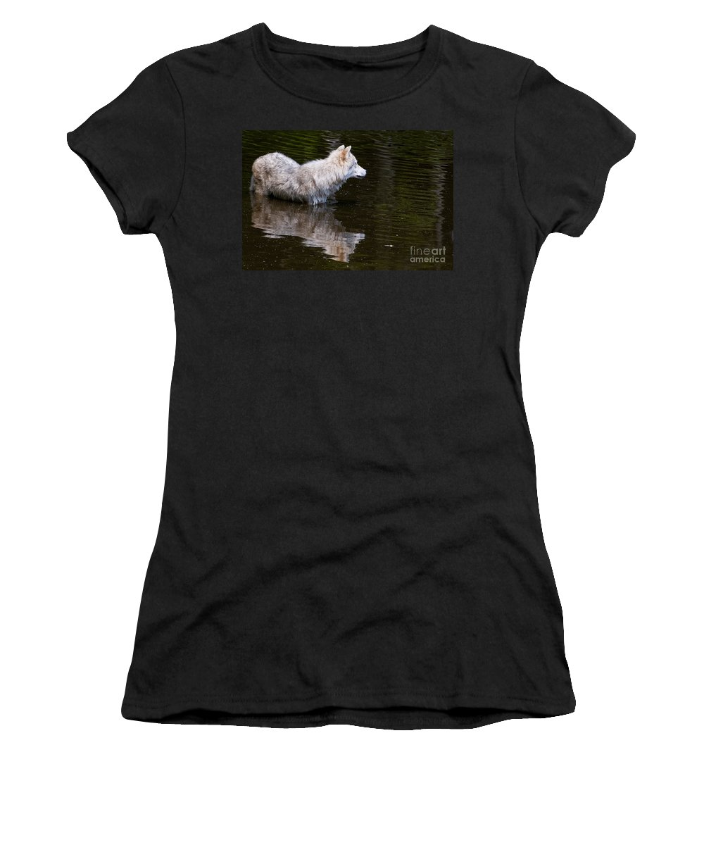 Arctic Wolf Photography Women's T-Shirt featuring the photograph Arctic Wolf In Pond by Wolves Only