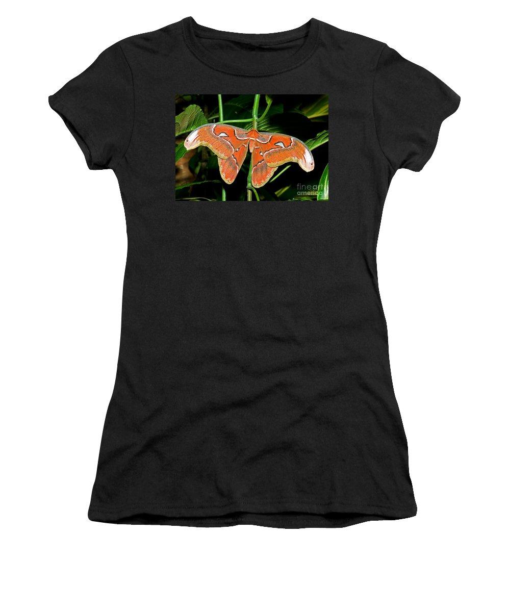 Animal Women's T-Shirt featuring the photograph Atlas Moth by Millard H. Sharp