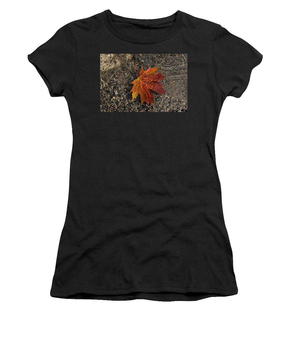 Georgia Mizuleva Women's T-Shirt featuring the photograph Autumn Colors And Playful Sunlight Patterns - Maple Leaf by Georgia Mizuleva