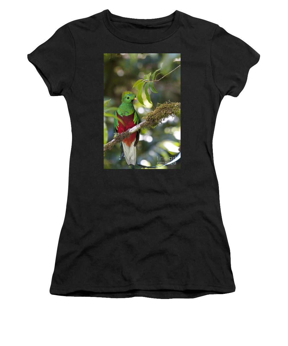 Bird Women's T-Shirt (Athletic Fit) featuring the photograph Beautiful Quetzal 1 by Heiko Koehrer-Wagner