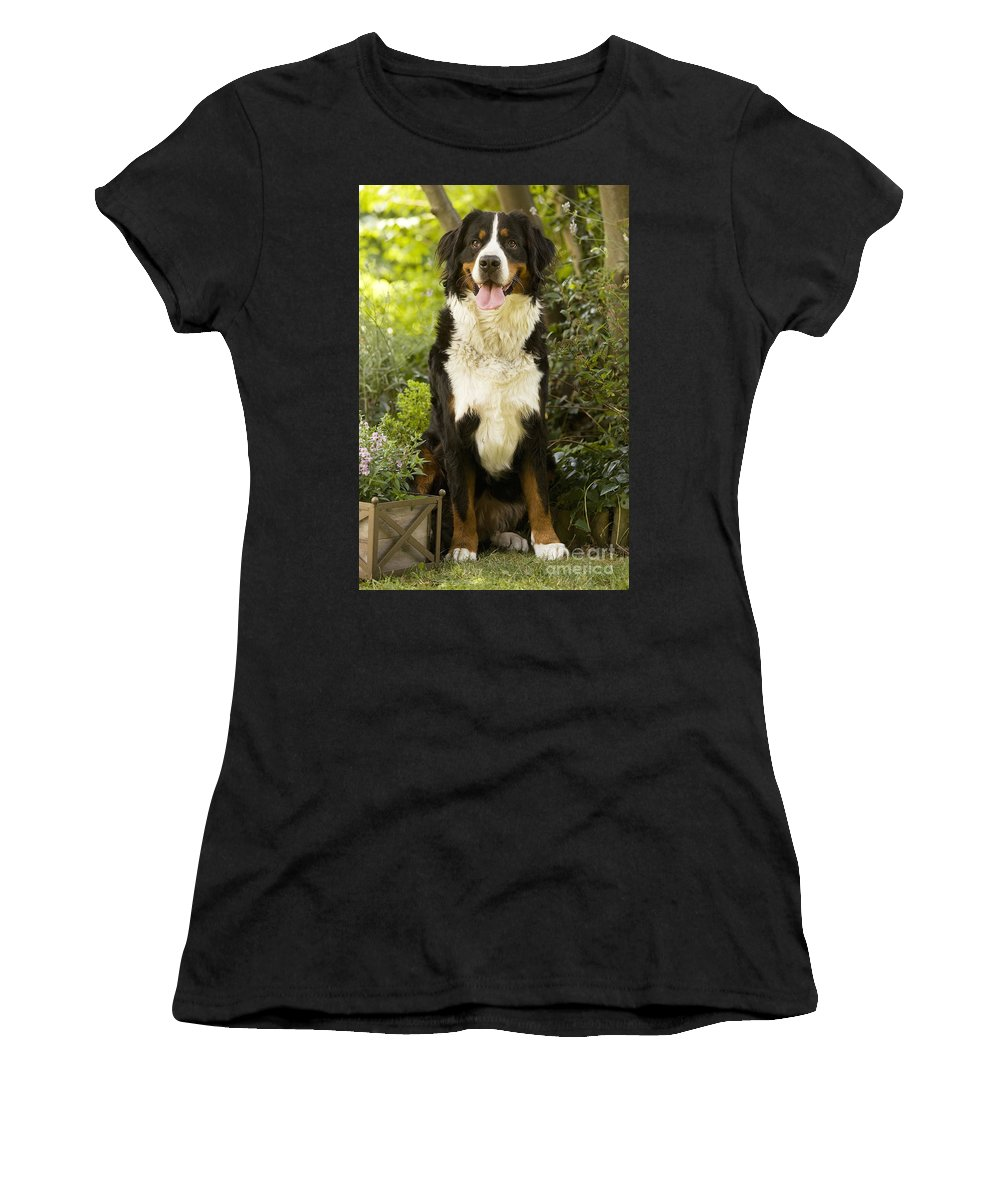 Bernese Mountain Dog Women's T-Shirt (Athletic Fit) featuring the photograph Bernese Mountain Dog by Jean-Michel Labat