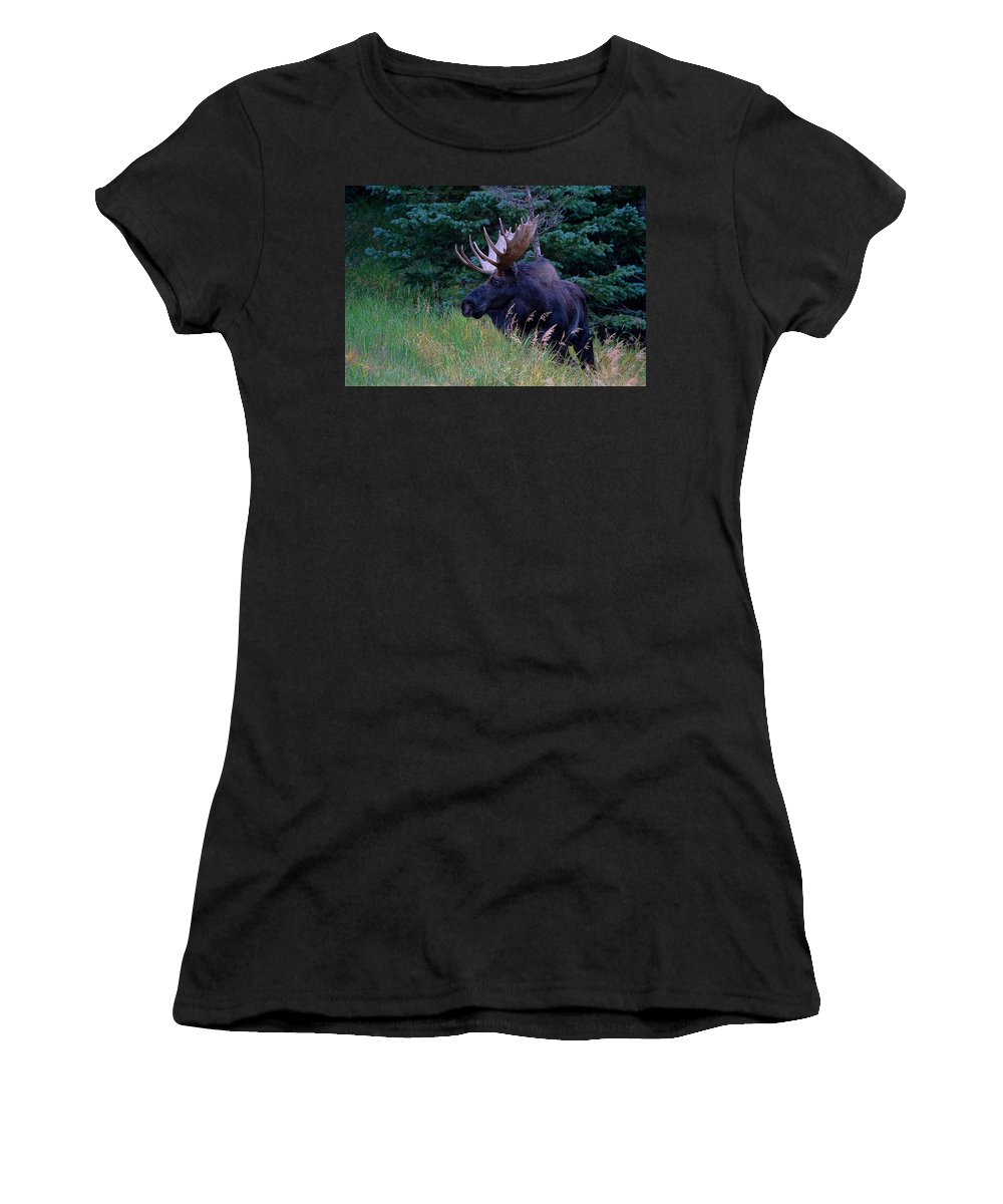 Moose Women's T-Shirt (Athletic Fit) featuring the photograph Big Bad John by Jim Garrison