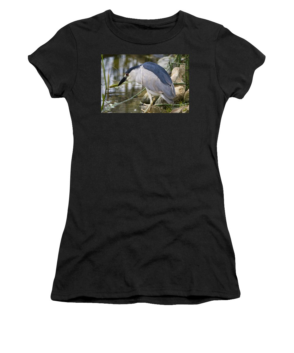 Zoology Women's T-Shirt featuring the photograph Black-crown Heron Going Fishing by David Millenheft