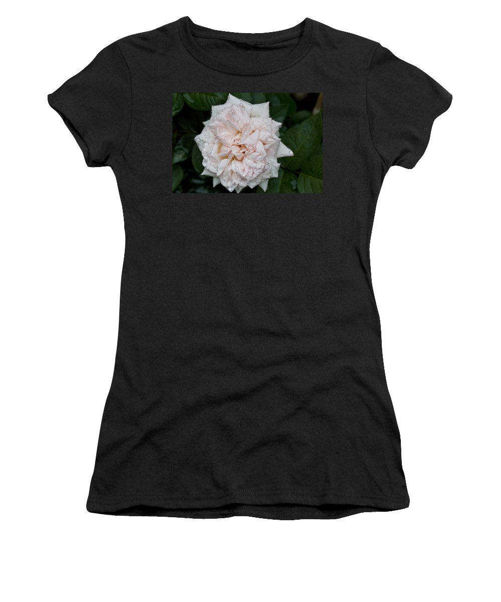 Rose Photographs Women's T-Shirt featuring the photograph Blush Dew by Vernis Maxwell