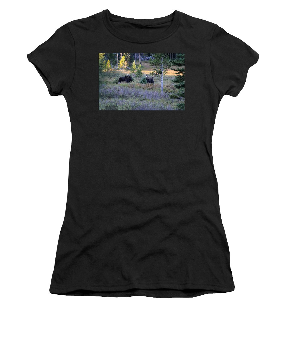 Bull Women's T-Shirt featuring the photograph Bulls In The Meadow by Shane Bechler