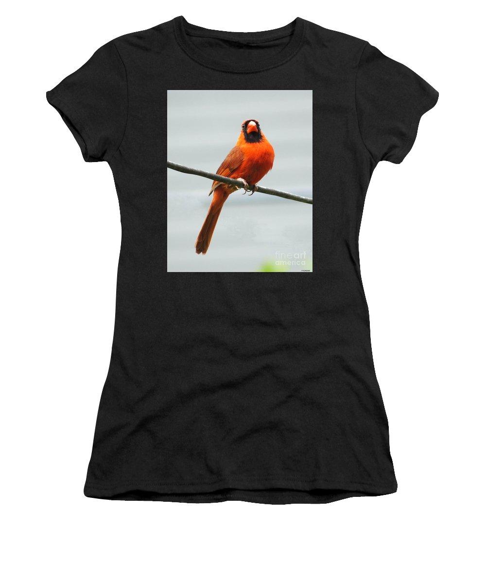 Redbird Women's T-Shirt featuring the photograph Cardinal IIi by Lizi Beard-Ward