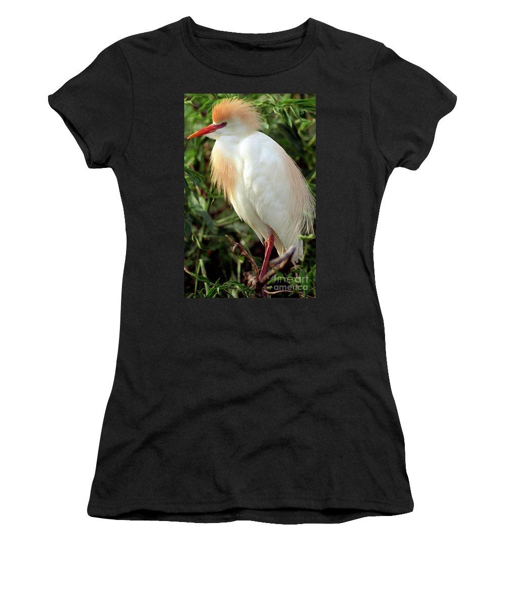 Cattle Egret Women's T-Shirt featuring the photograph Cattle Egret by Millard H. Sharp