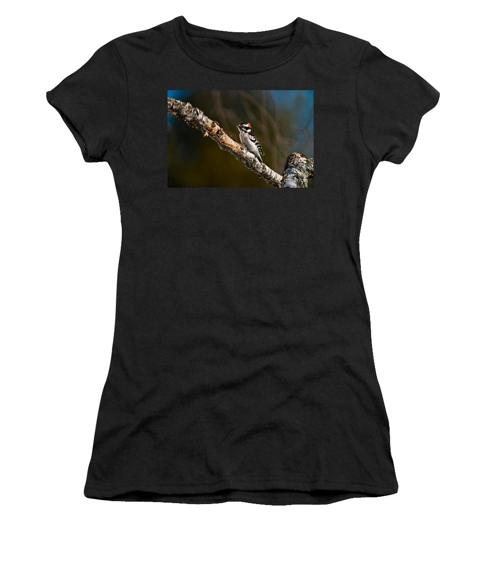 Downy Woodpecker Women's T-Shirt featuring the photograph Downy Woodpecker Pictures 36 by World Wildlife Photography