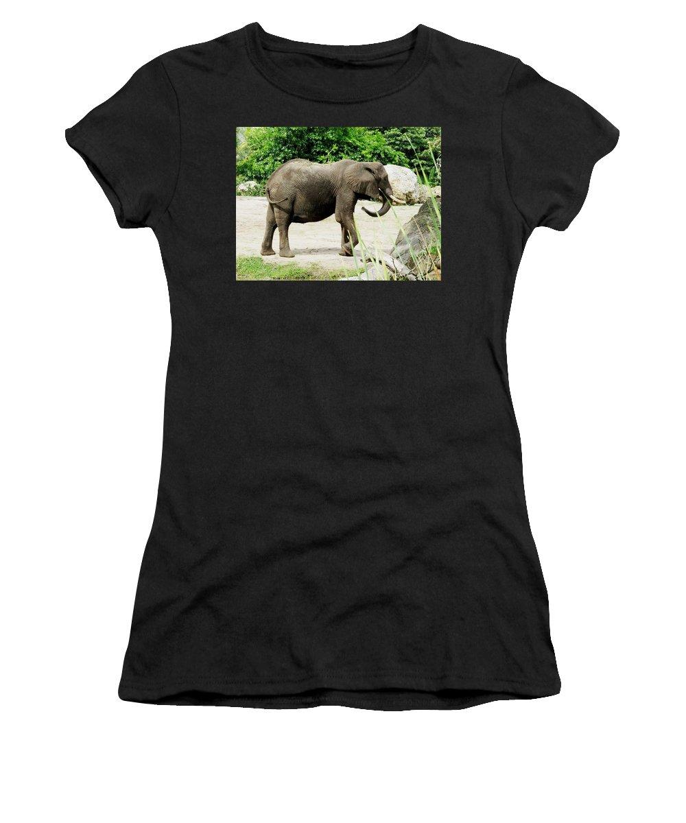 Elephant Women's T-Shirt featuring the photograph Elephant by Zina Stromberg