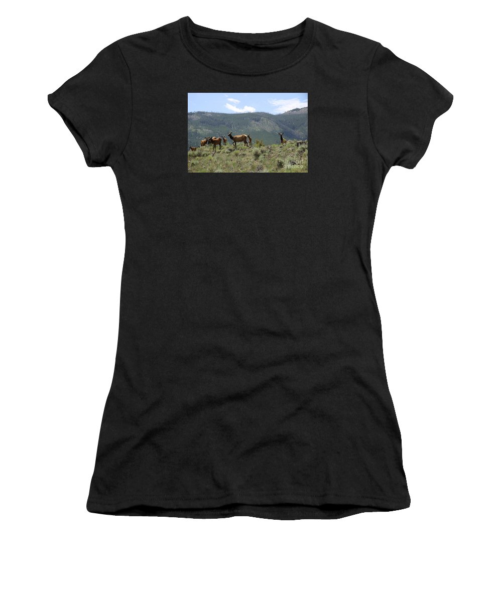 Elk Cow Women's T-Shirt (Athletic Fit) featuring the photograph Elk Family by Christiane Schulze Art And Photography
