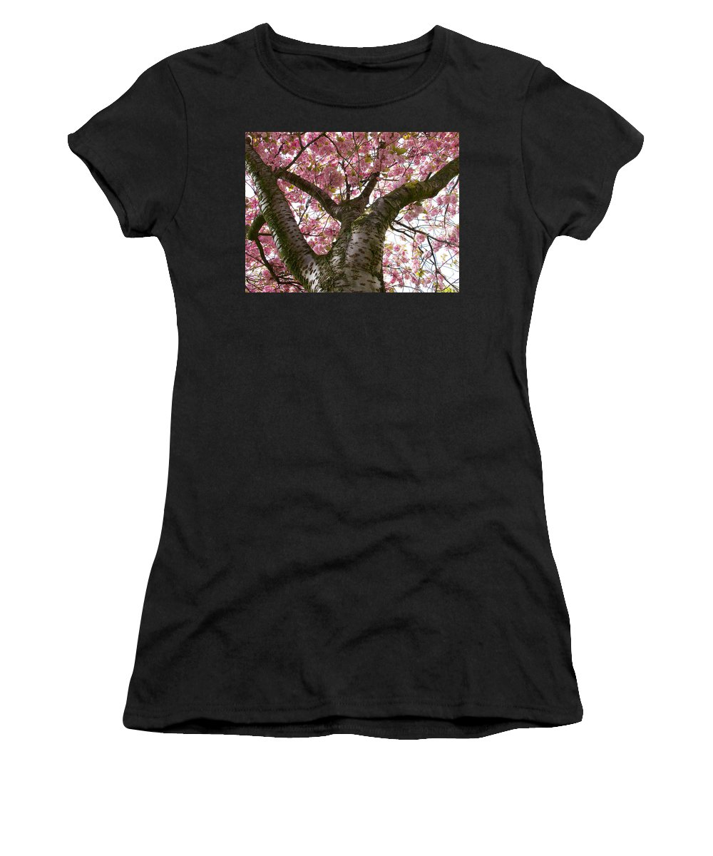 Holland Women's T-Shirt featuring the photograph Enkhiuzen Cherry Blossoms by David Beebe