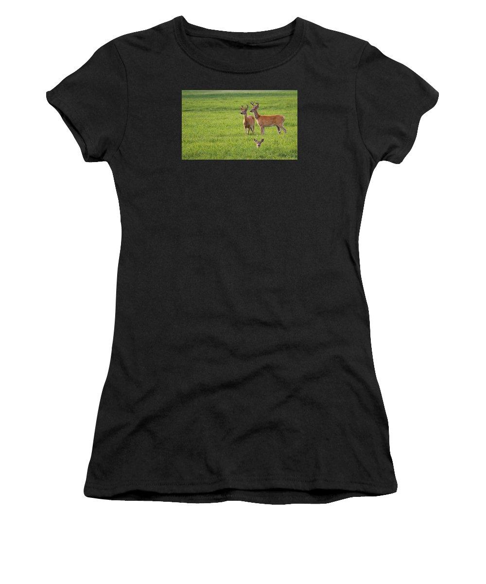 White Tailed Buck Women's T-Shirt featuring the photograph Field Deer by Steve McKinzie