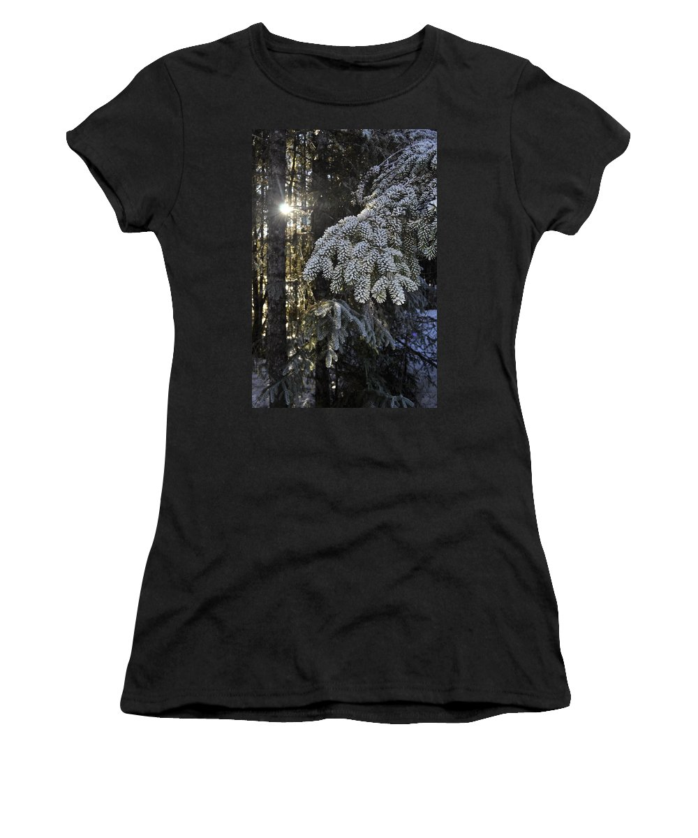 Sun Women's T-Shirt featuring the photograph Forest In Winter by Cathy Mahnke