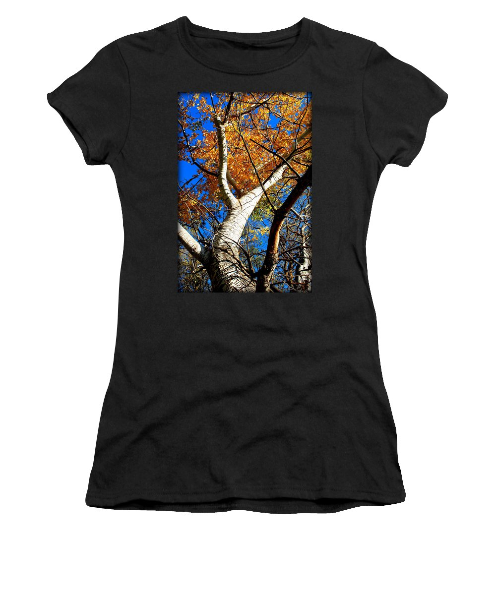 Tree Women's T-Shirt (Athletic Fit) featuring the photograph Golden Leaves II by Kathy Sampson