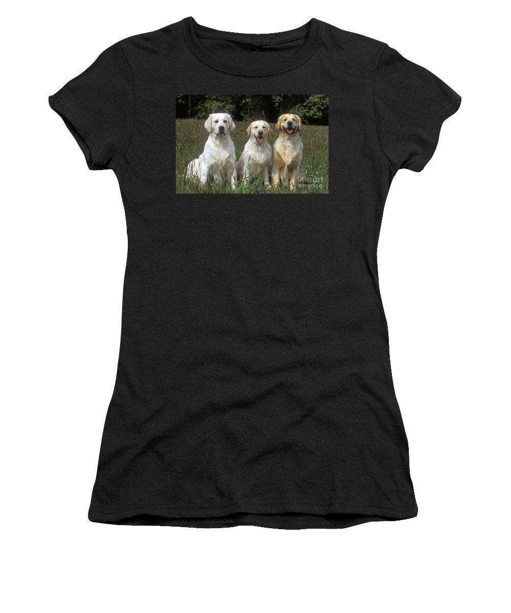 Golden Retriever Women's T-Shirt (Athletic Fit) featuring the photograph Golden Retrievers by Jean-Michel Labat