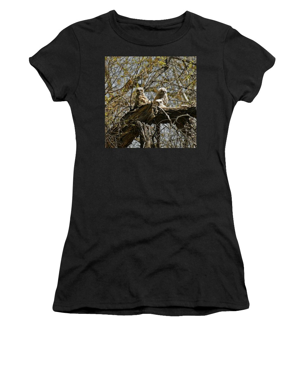 Birds Women's T-Shirt (Athletic Fit) featuring the photograph Great Horned Owlets Photo by Ernie Echols