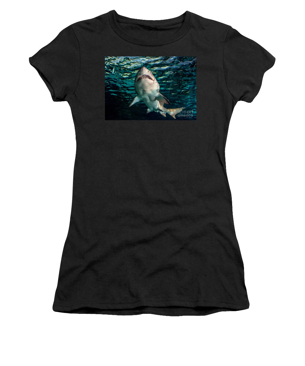 Shark Women's T-Shirt featuring the photograph Great White by Cheryl Baxter