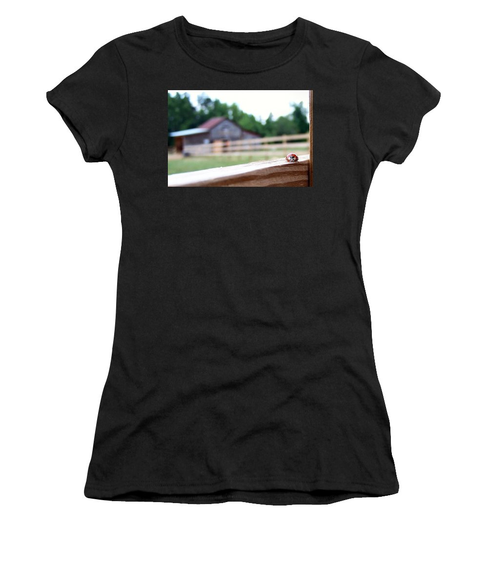 Ladybug Women's T-Shirt featuring the photograph Hide And Seek by Nadine Lewis