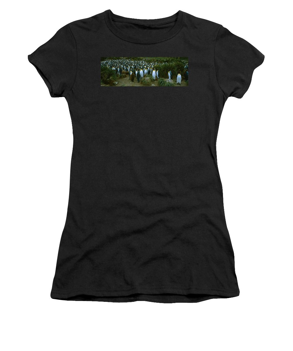 Royal Colony Photographs Women's T-Shirts