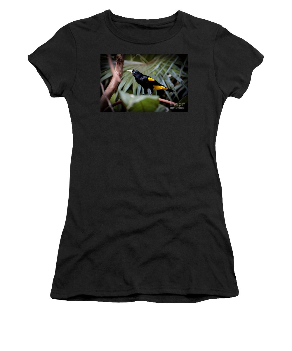 Bird Women's T-Shirt (Athletic Fit) featuring the photograph I Think I Hear Something by Rich Priest