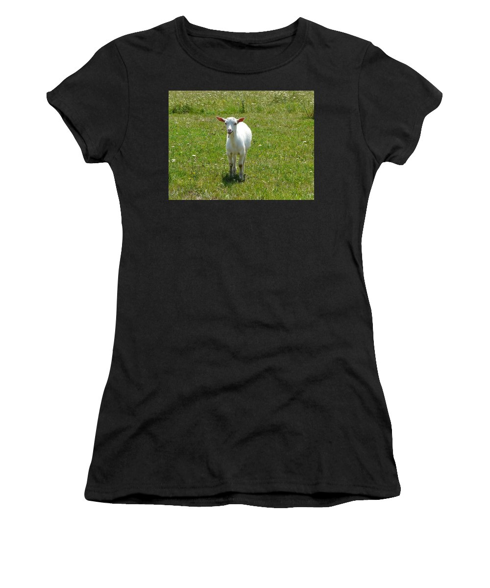 Kid Women's T-Shirt (Athletic Fit) featuring the photograph Kid Goat by Valerie Ornstein