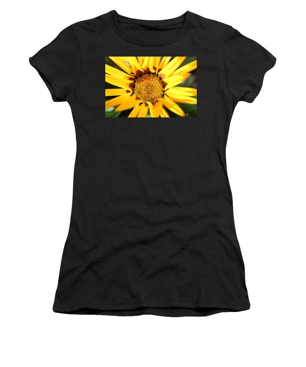 Gazania Women's T-Shirt featuring the photograph Kiss Of Orange by Robert Phelan