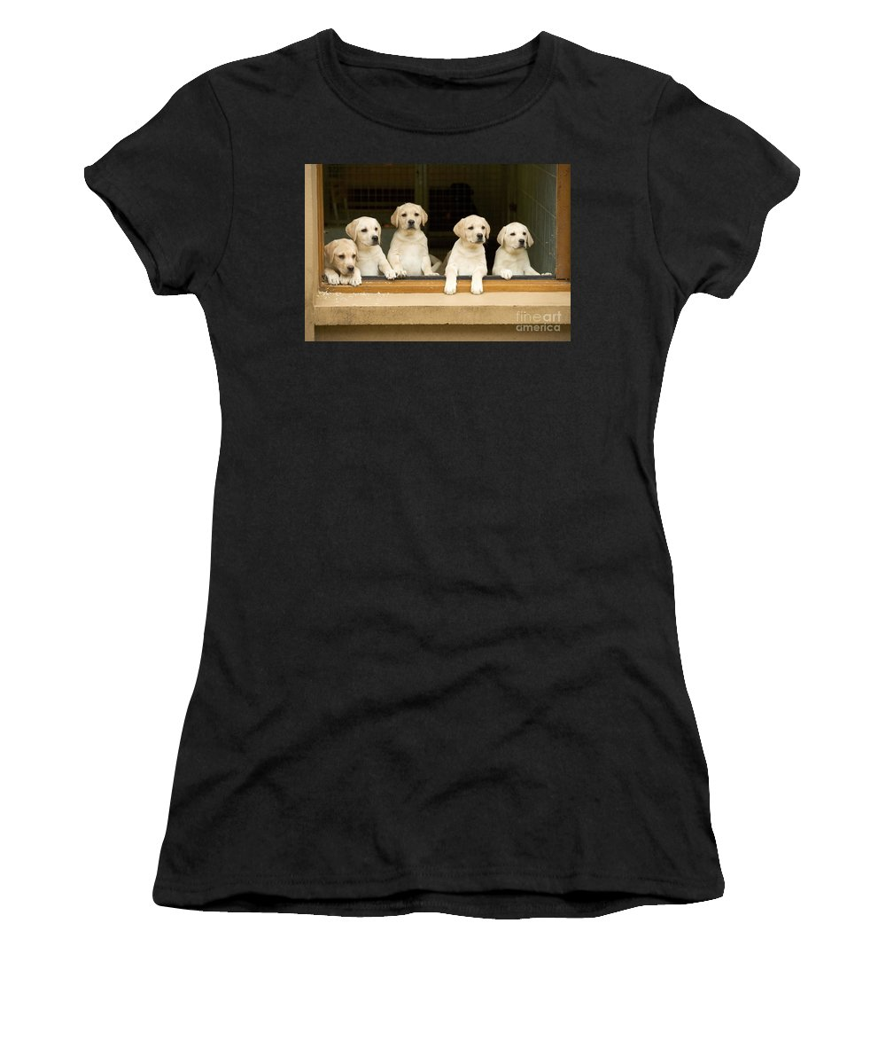 Labrador Retriever Women's T-Shirt (Athletic Fit) featuring the photograph Labrador Puppies At Window by Jean-Michel Labat