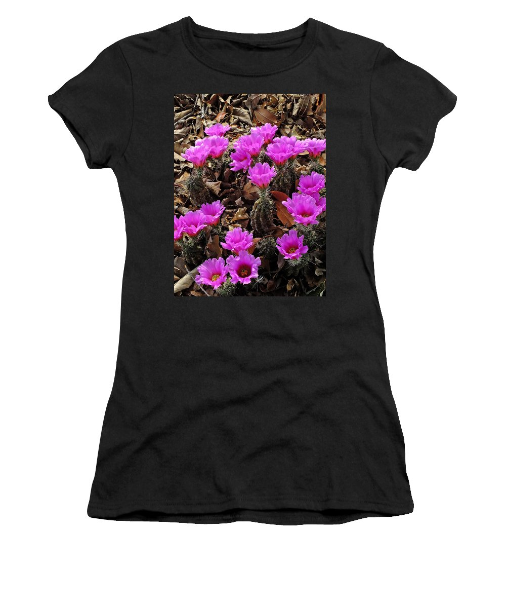 Cacti Women's T-Shirt featuring the photograph Ladyfinger Hedgehog Cactus Blooms by Bill Morgenstern