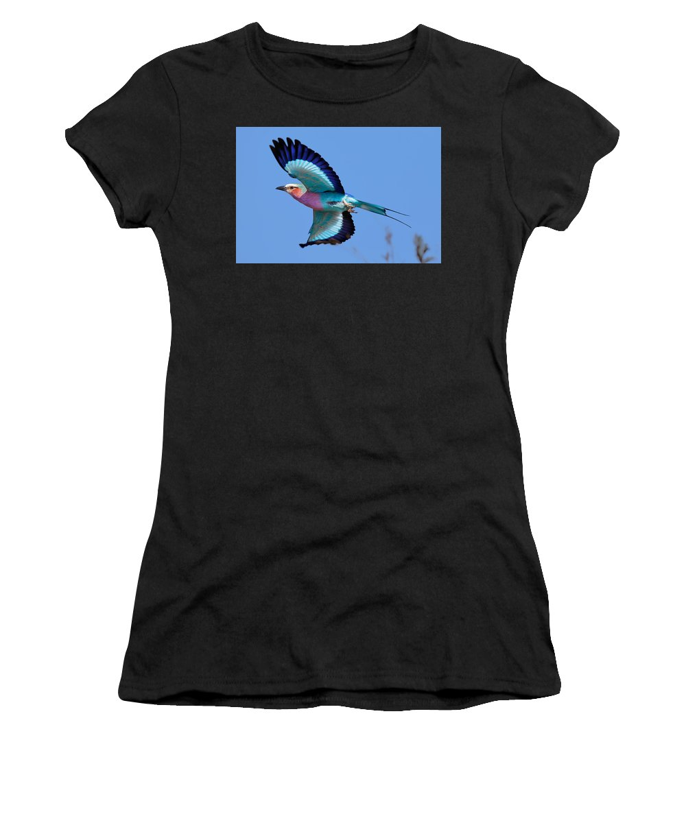 Lilac-breasted Women's T-Shirt featuring the photograph Lilac-breasted Roller In Flight by Johan Swanepoel