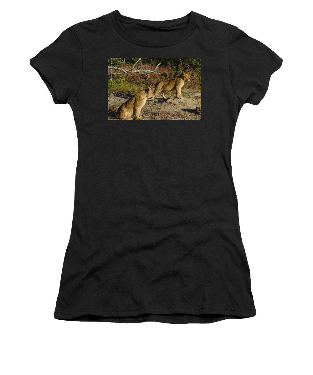Zimbabwe Women's T-Shirt featuring the photograph Lion Cubs Of Zimbabwe by Pixabay