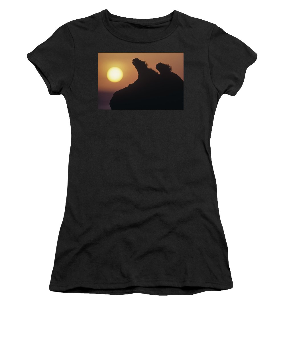 Feb0514 Women's T-Shirt (Athletic Fit) featuring the photograph Marine Iguanas Silhouetted Galapagos by Tui De Roy