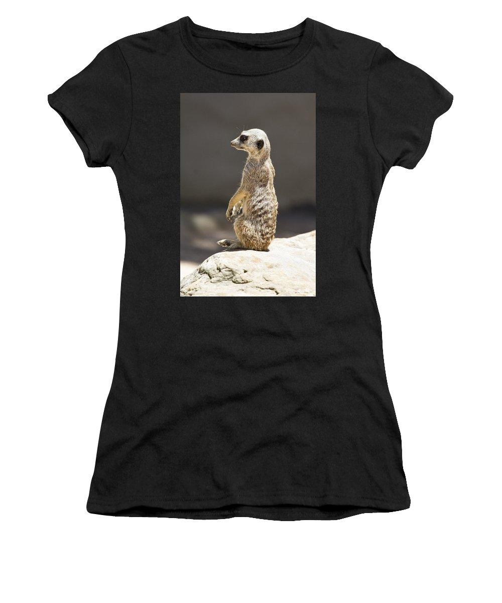 Meerkat Women's T-Shirt (Athletic Fit) featuring the photograph Meerkat Manor V5 by Douglas Barnard