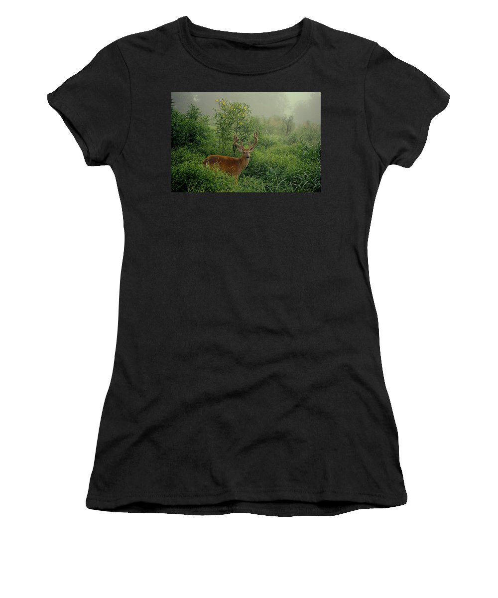 Deer Women's T-Shirt (Athletic Fit) featuring the photograph Misty Morning Deer by Eric Albright