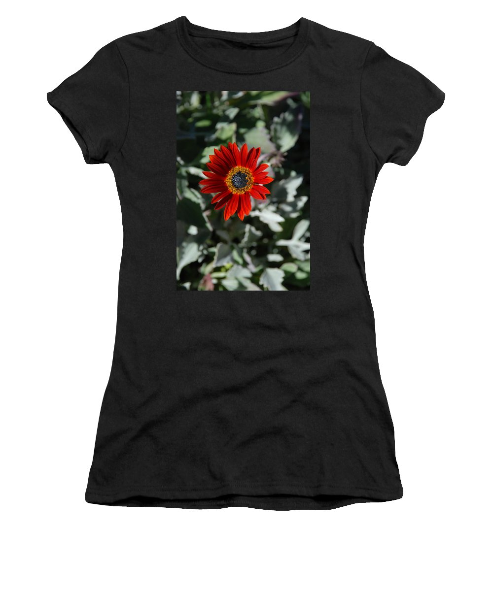 Flower Women's T-Shirt (Athletic Fit) featuring the photograph Nature's Gold Flower by Carol Eliassen