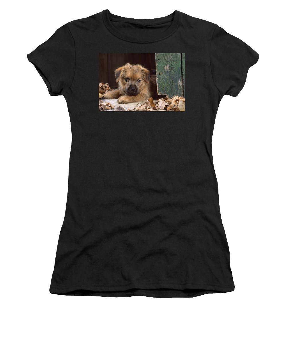 Norfolk Terrier Women's T-Shirt (Athletic Fit) featuring the photograph Norfolk Terrier Puppy By Barn Door by John Daniels