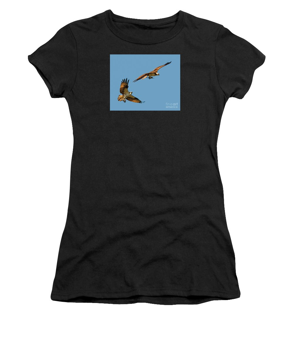 Osprey Women's T-Shirt featuring the photograph Osprey Pair by Timothy Flanigan