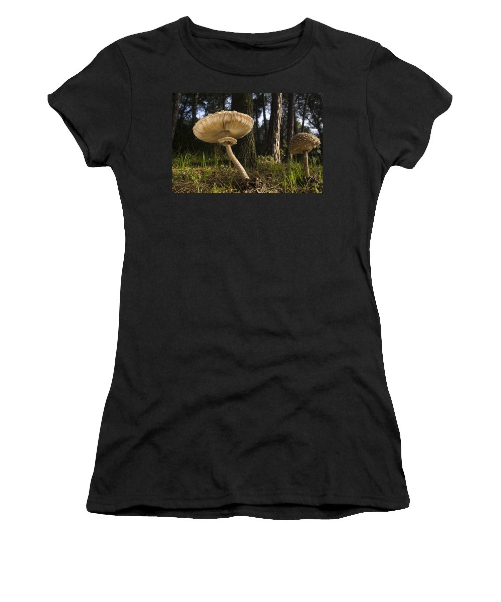 Feb0514 Women's T-Shirt (Athletic Fit) featuring the photograph Parasol Mushrooms Pair In Forest Spain by Albert Lleal