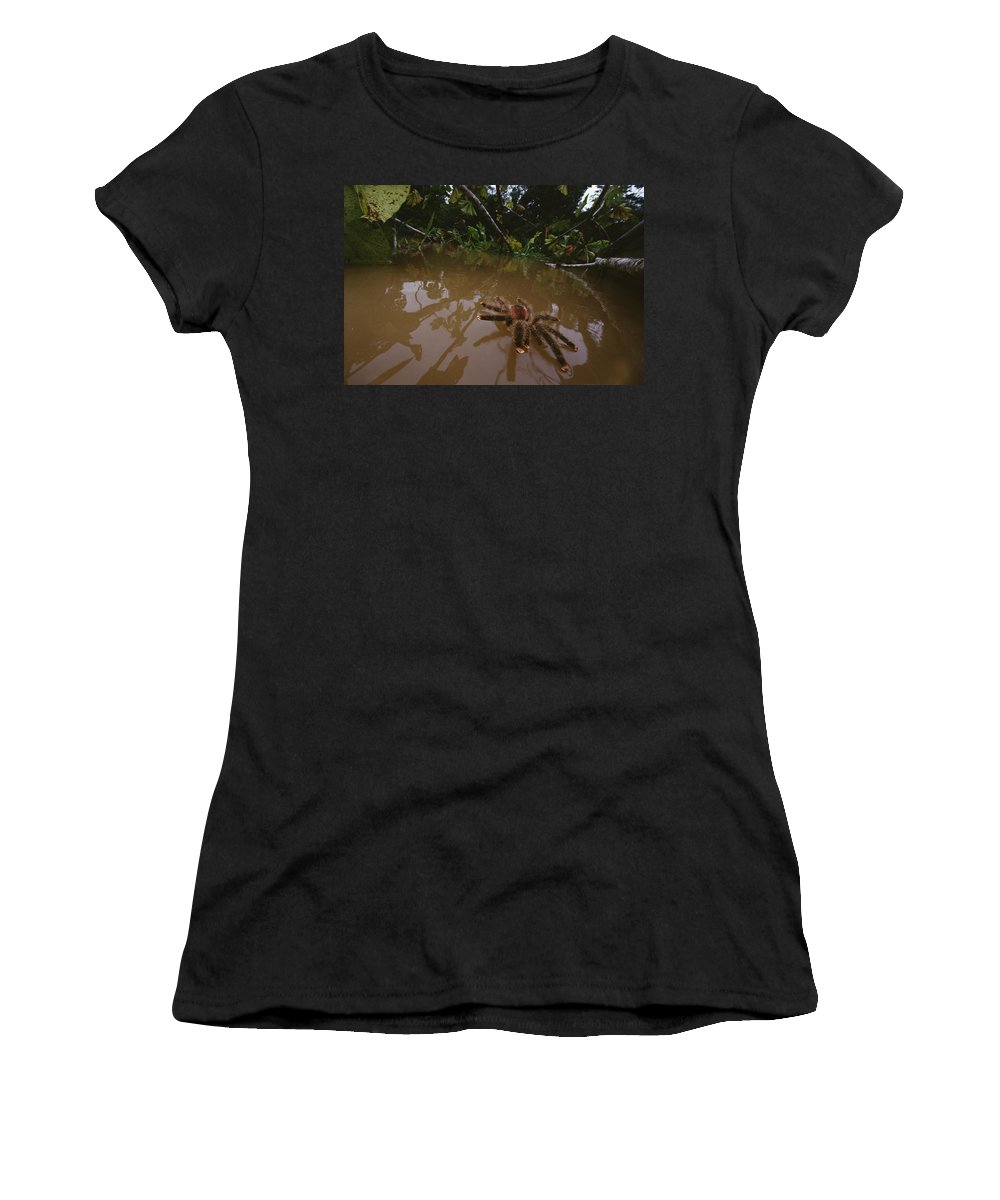 Feb0514 Women's T-Shirt (Athletic Fit) featuring the photograph Peruvian Pinktoe Tarantula Peru by Mark Moffett