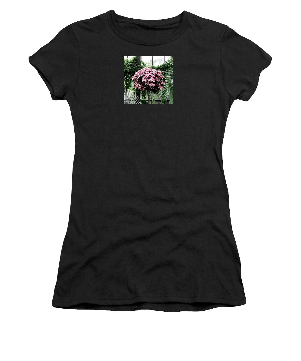 Pink Poinsettias Women's T-Shirt featuring the photograph Poinsettia Tree Longwood Gardens by Angela Davies