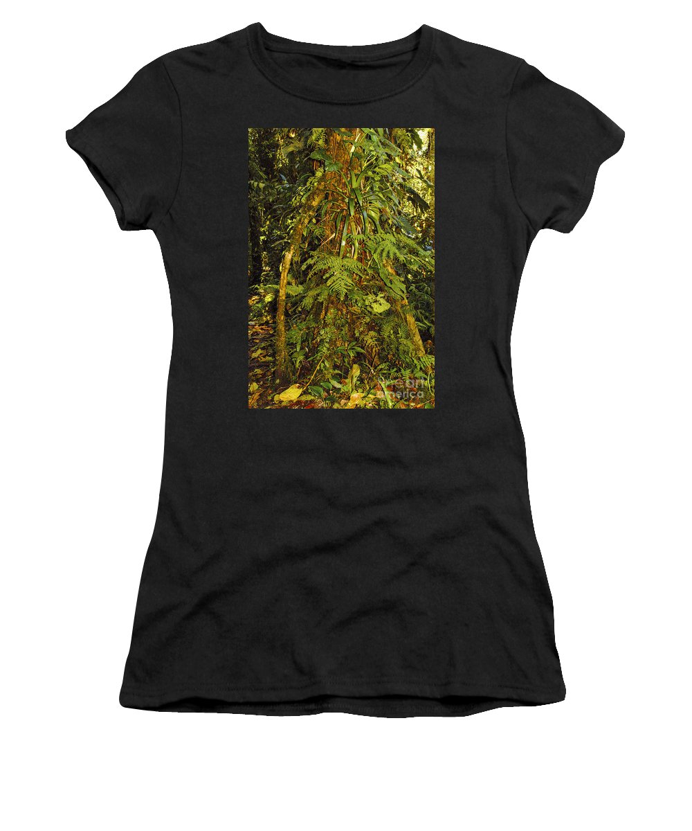 Monteverde Reserve Costa Rica Rainforest Fern Ferns Tree Trees Branch Branches Leaves Leaves Plant Plants Nature Forest Forests Rainforest Rainforests Women's T-Shirt (Athletic Fit) featuring the photograph Rainforest Colors by Bob Phillips