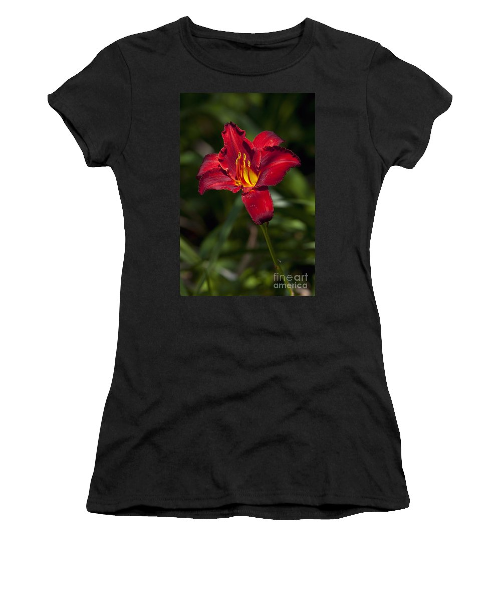 Red Women's T-Shirt featuring the photograph Red And Yellow Daylily by Jason O Watson