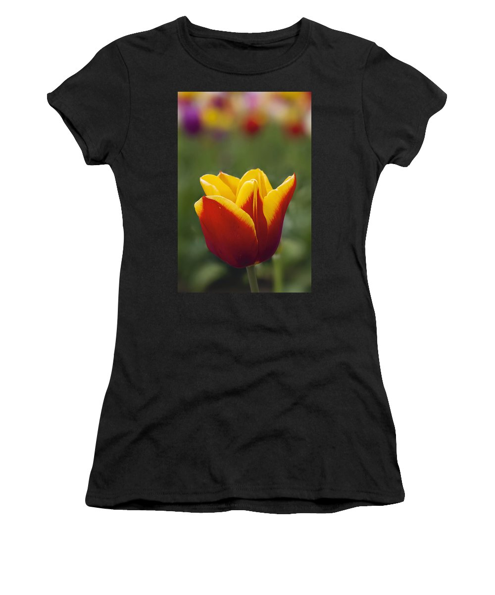 Tulip Women's T-Shirt (Athletic Fit) featuring the photograph Red And Yellow Tulip Closeup by Jit Lim
