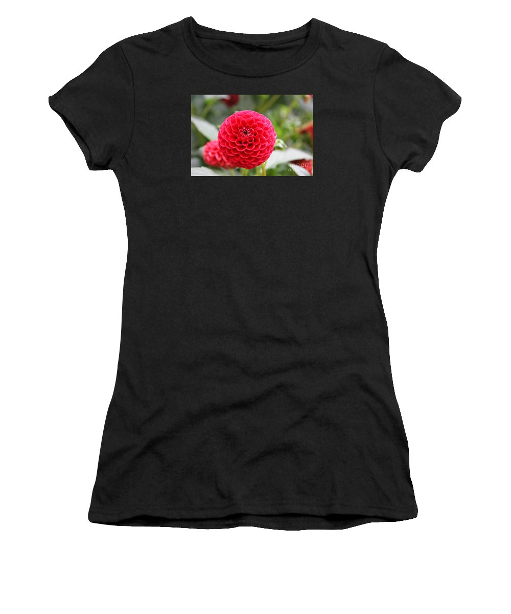 Dahlia Women's T-Shirt (Athletic Fit) featuring the photograph Red Dahlia by Lali Kacharava