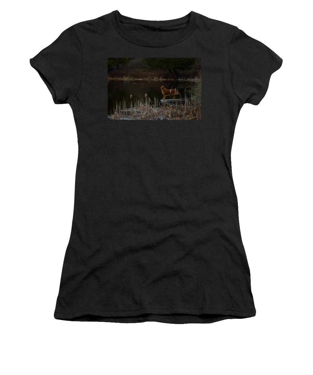 Golden Retriever Women's T-Shirt (Athletic Fit) featuring the photograph Retriever Focus by Thomas Phillips