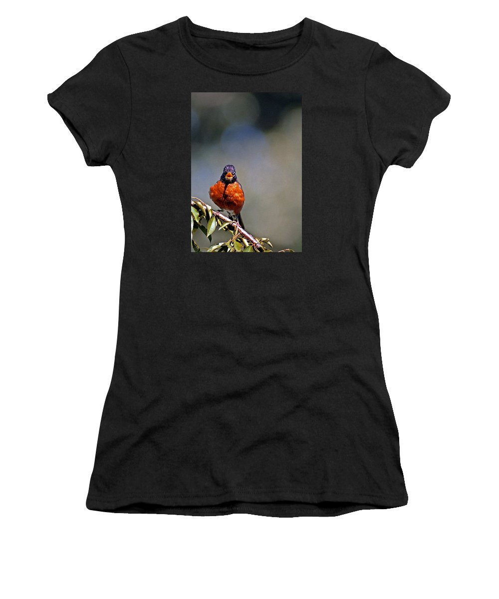 Bird Women's T-Shirt (Athletic Fit) featuring the photograph Rockin Robin by Skip Willits