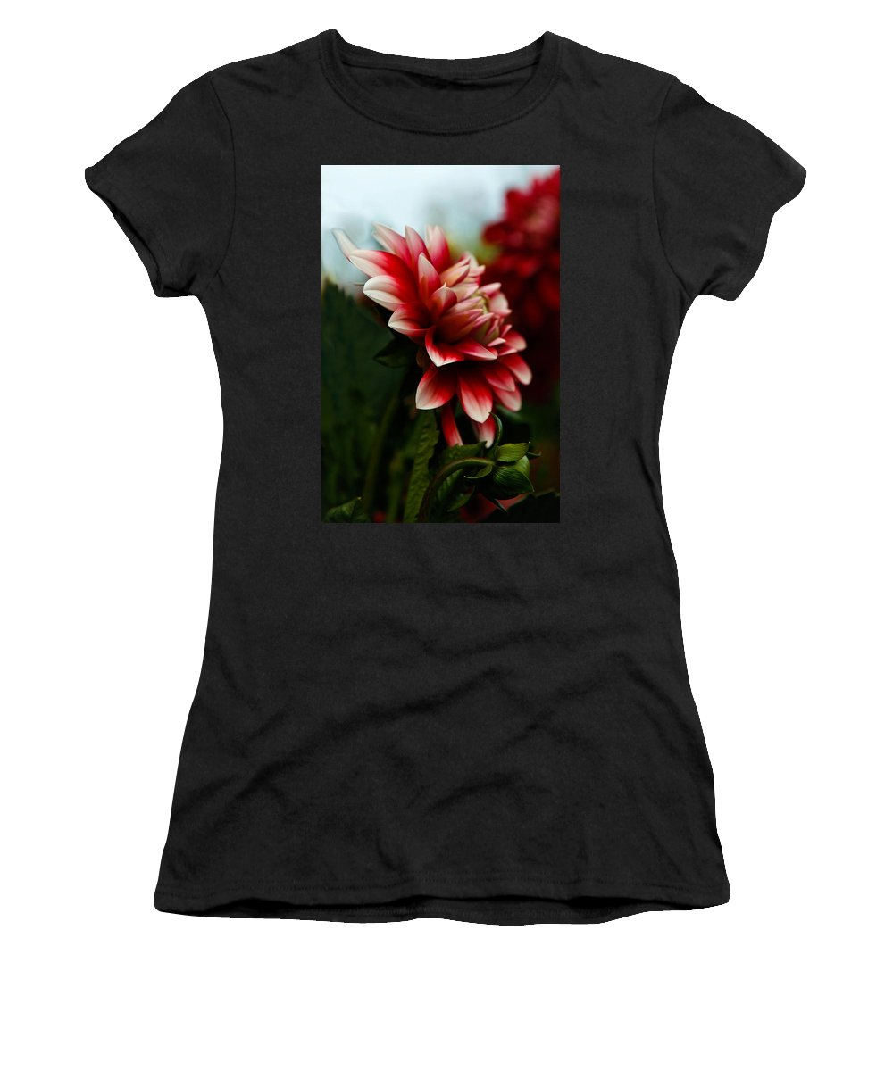 Dahlia Women's T-Shirt (Athletic Fit) featuring the photograph Single Red Dahlia by Athena Mckinzie