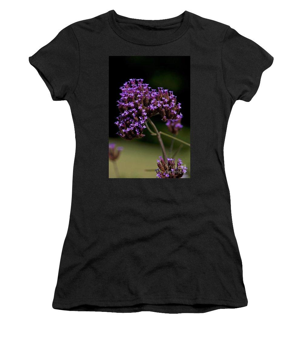 Verbena Women's T-Shirt featuring the photograph Small Purple Flowers On A Verbena Plant by Jason O Watson
