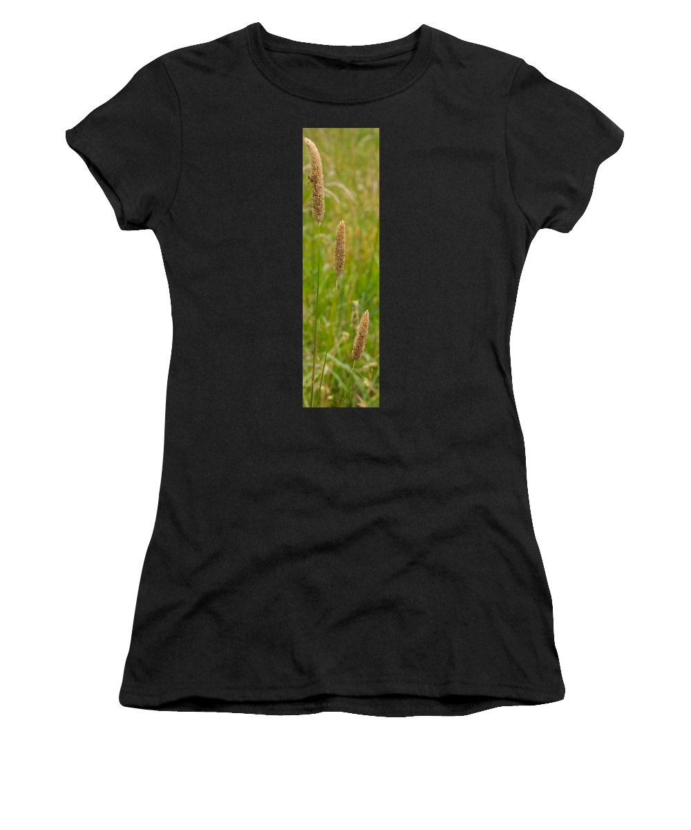 Spider Women's T-Shirt (Athletic Fit) featuring the photograph Spider's Grass Staircase by Kaleidoscopik Photography