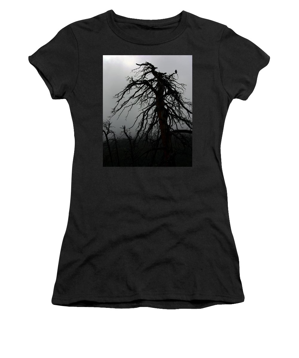 Tree Women's T-Shirt featuring the photograph Spooky Tree by David Sanchez